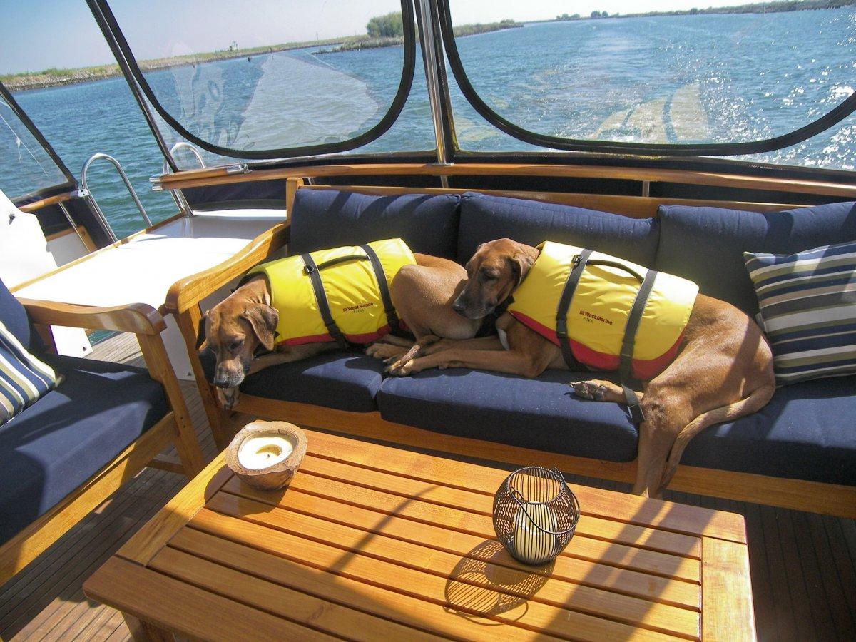 Kona & Rica take a nap.jpg